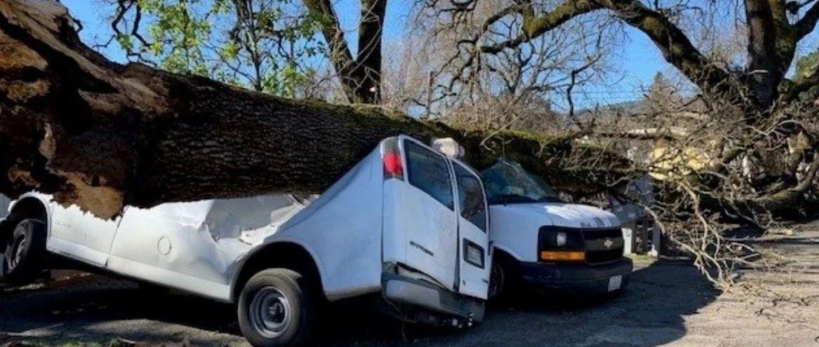 加州历史最强风突袭湾区…大楼玻璃破裂,车顶房顶被树木砸穿,航班无法降落