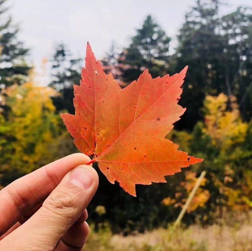纽约的秋天来了,赏枫的日子到了