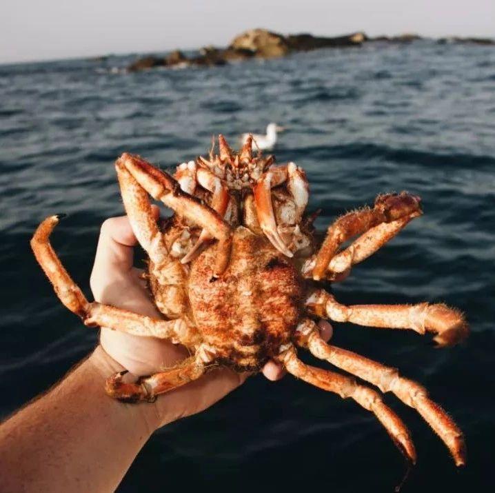 新手加州海钓指南 | 身在太平洋沿岸的海产天堂,大蚌海胆肥鱼自己抓!