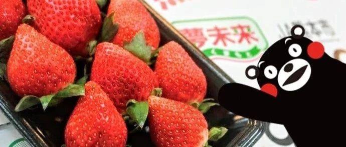 熊本空投的超人气草莓,还有丑橘、麟麟金果等维生素天团,和湾区的春天更配哦。