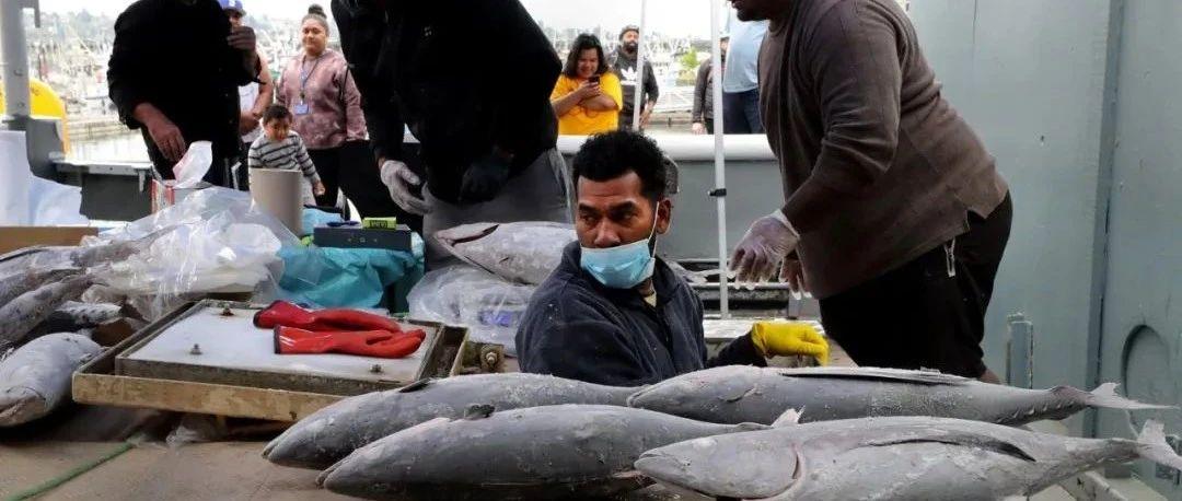 西雅图的金枪鱼又卖不出去了, 周末渔人码头$3/磅